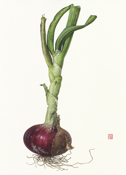 <strong>Red Onion </strong> - <small><em>Allium cepa</em>    14 1/2 x 10 3/4 </small>   watercolor on paper