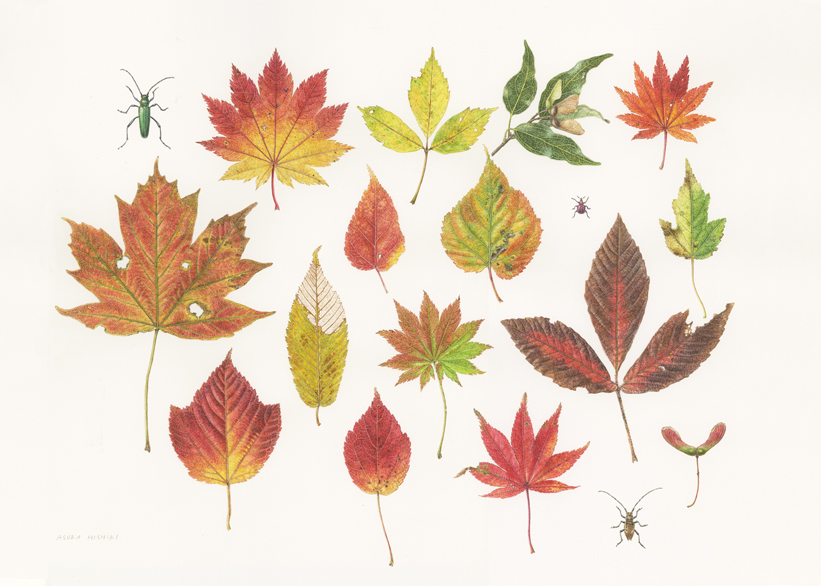 <strong>Maple leaves -<em>Acer</em></strong>   <small> 14 x 43   watercolor on paper</small>
