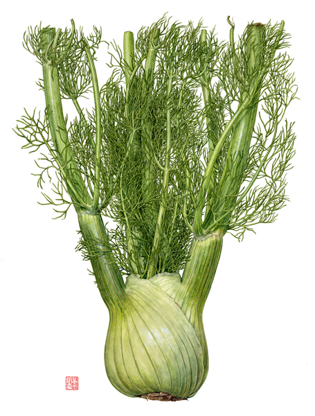 <strong>Fennel</strong>  -<small><em> Foeniculum vulgare </em>    15 1/2 x 11 </small>   1/2   watercolor on paper