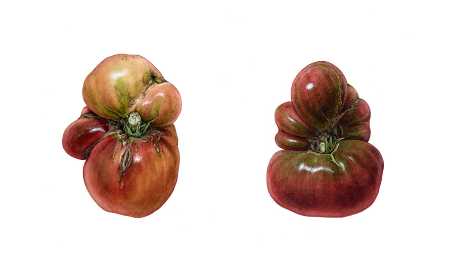 "<strong>YAKUZA brothers</strong> <small>A portrait of heirloom tomatoes </small> 11 1/2"" x 17 1/2\"""