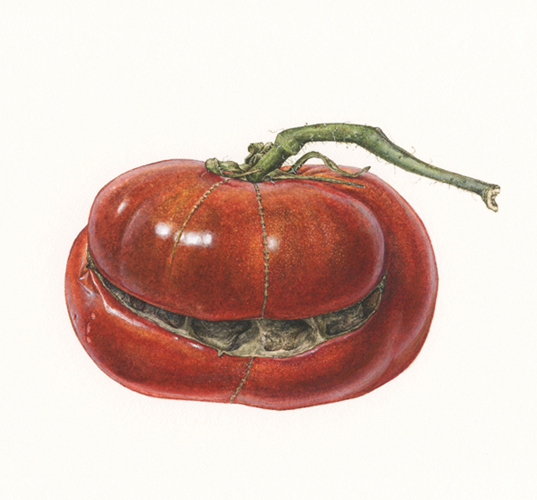 <strong>Smiley</strong> <small><em>A portrait of a heirloom tomato </em></small>14 x 11