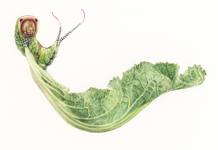 <Strong> A puss moth caterpillar, on balance </strong> 