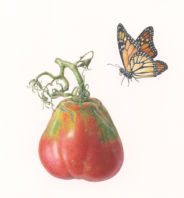 <Strong> madama butterfly  </strong> 