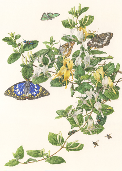 title ; Japanese honeysuckle