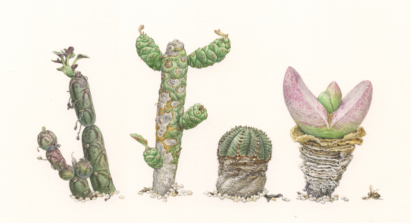 <strong> Wave Hill little gangsters </strong></br> <small>From left to right
